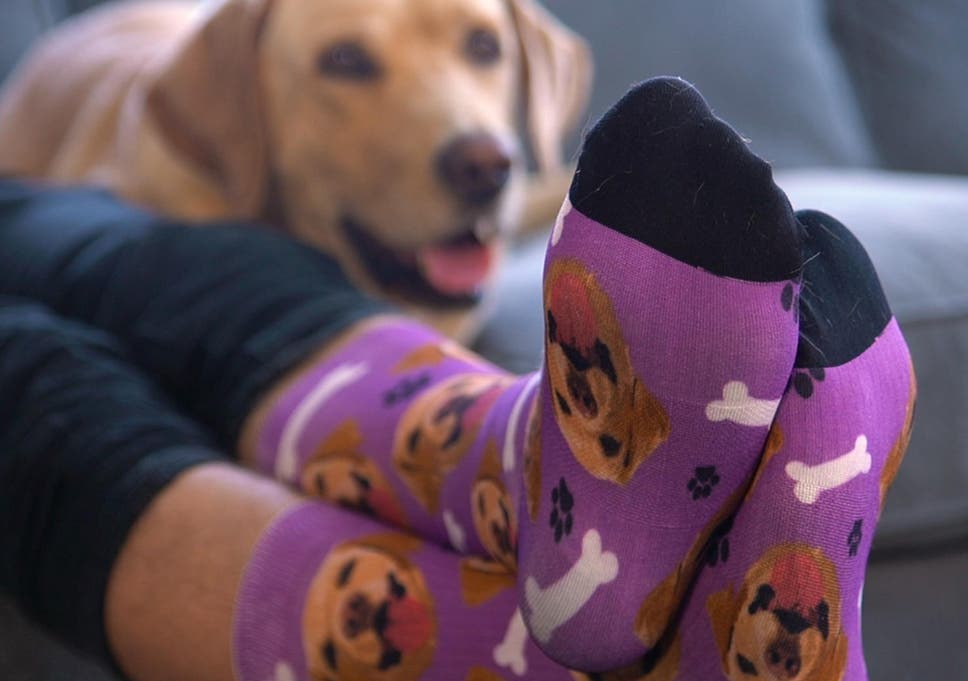c9de2c5a 10 best gifts for animal lovers   The Independent