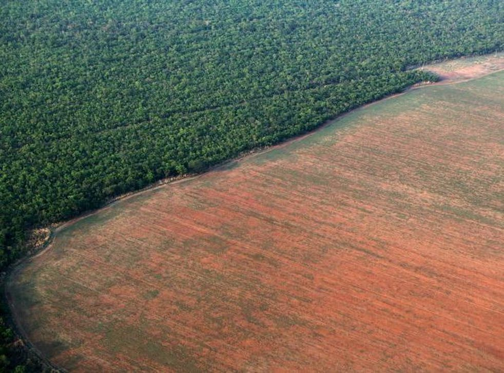 The Amazon rainforest is bordered by deforested land, prepared for agriculture