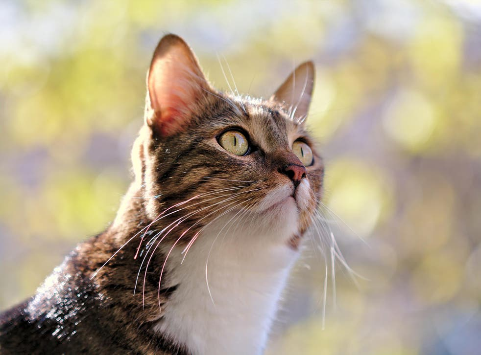 Researchers studied 561 people's reactions to cat and dog sounds