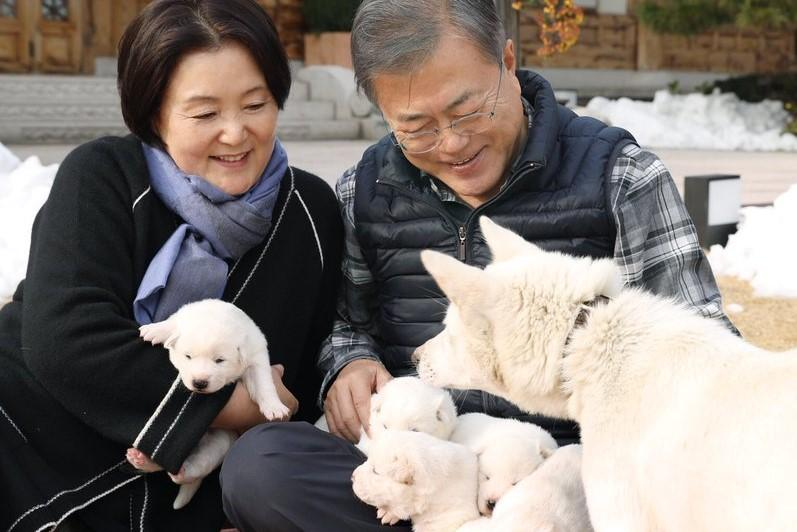 Pup of peace: Dog given as present by Kim Jong-un gives birth in South Korea