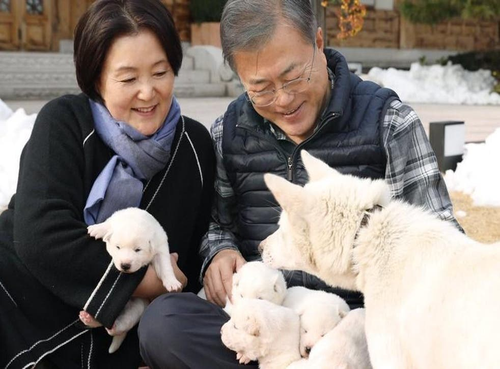 """South Korea's president Moon Jae-in and wife Kim Jung-sook with puppies mothered by the Norths """"peace gift"""" dog"""