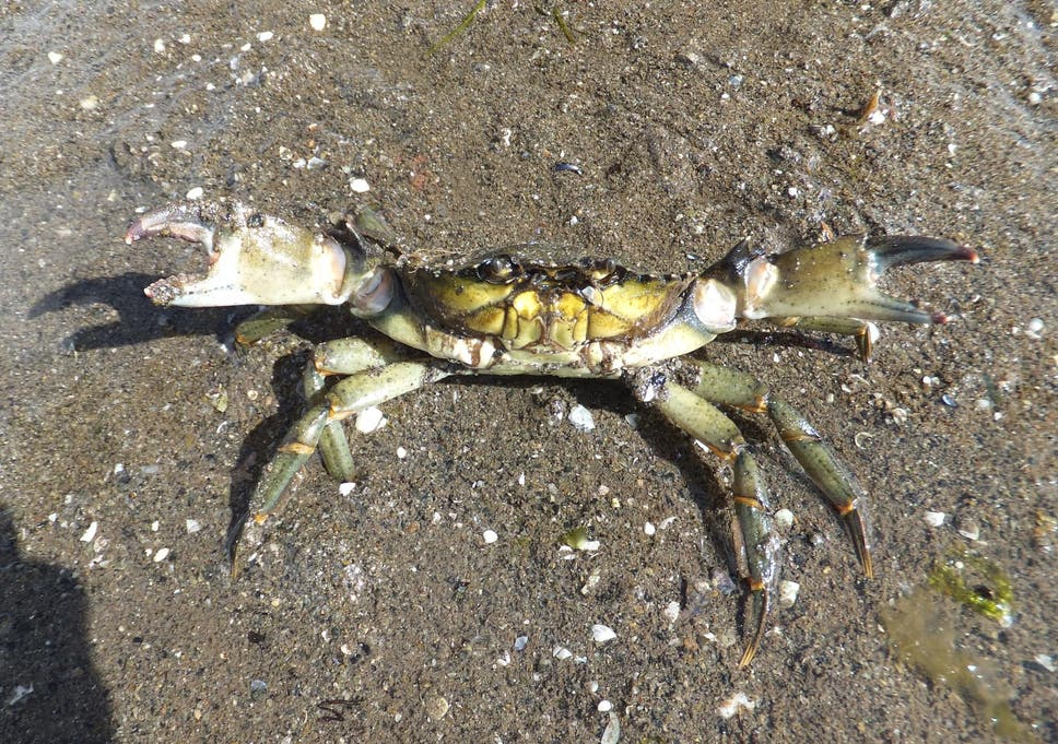 Plastic chemicals changing marine animals' behaviour and