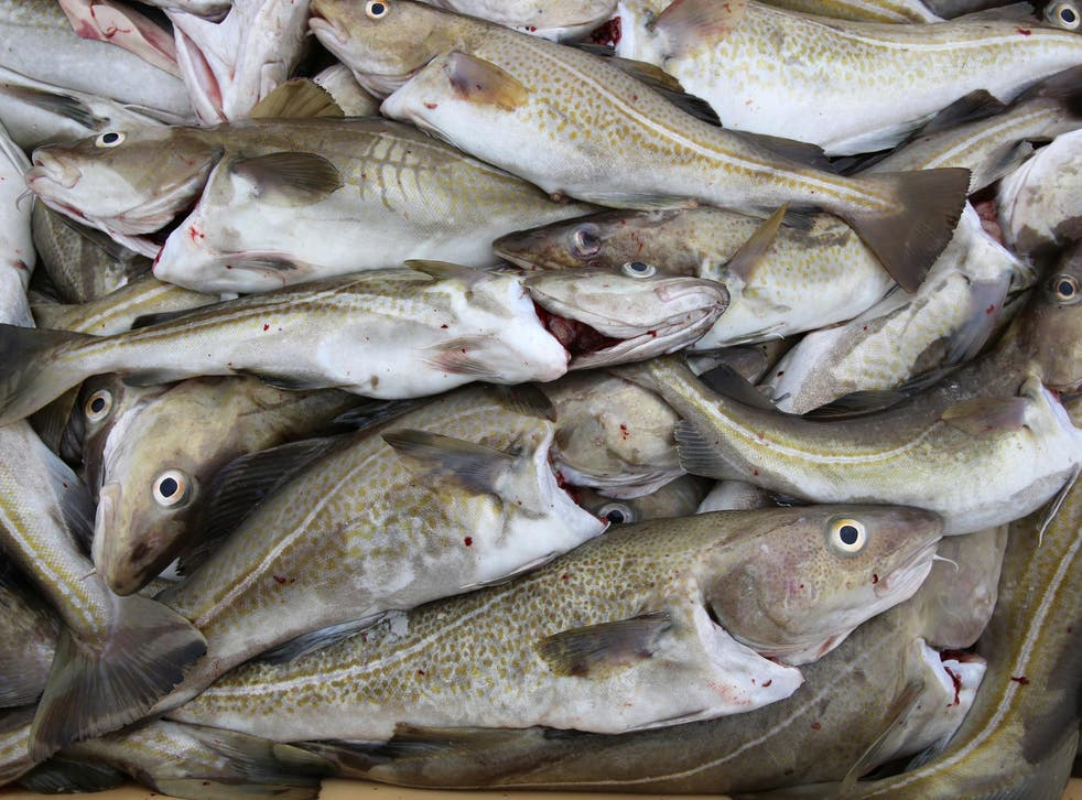 Study is based on three decades of data from fish and seawater from the Gulf of Maine (cod, stock image)