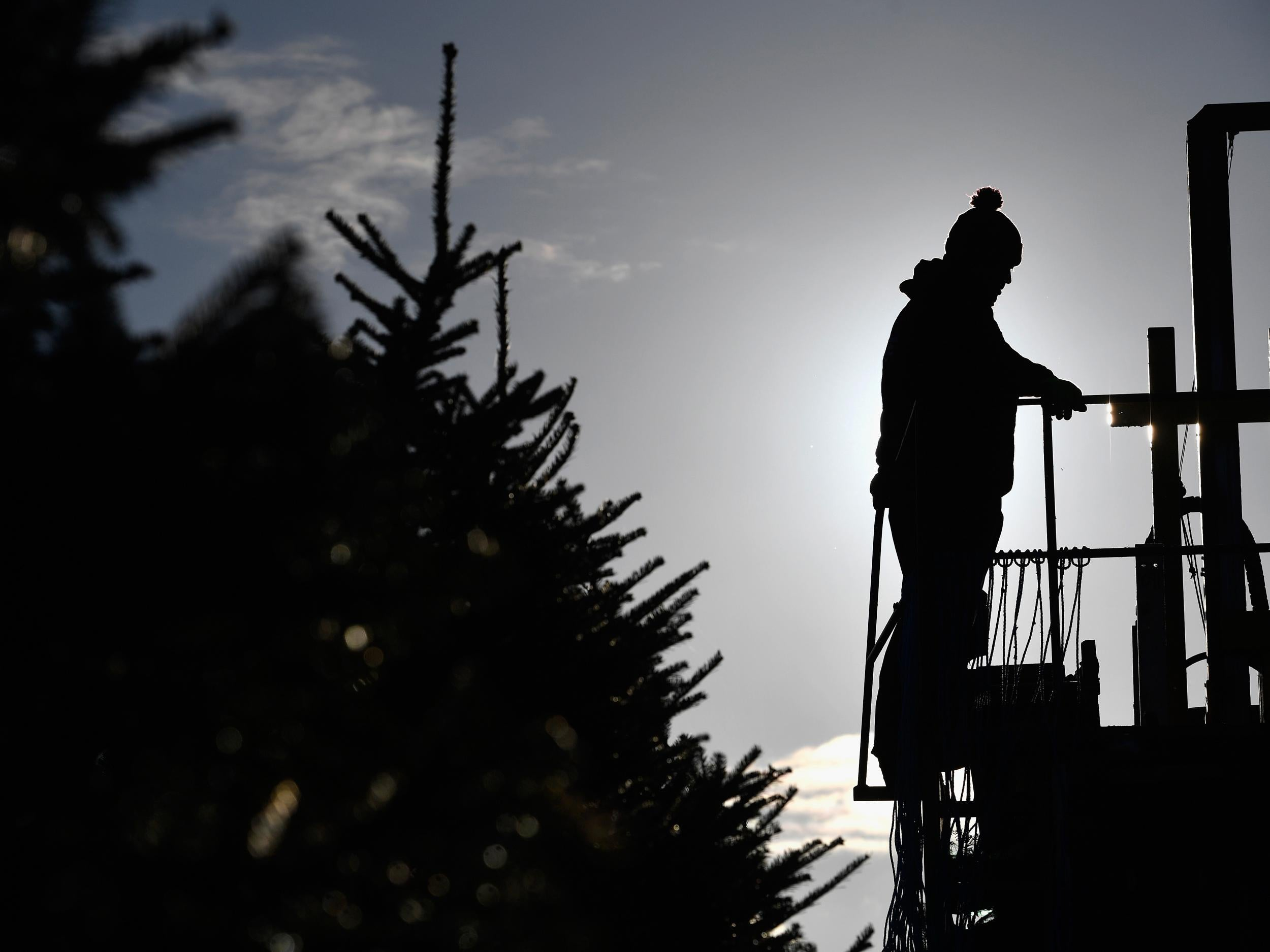 One in three of Britain's newly planted Christmas trees wiped out by heatwaves this summer