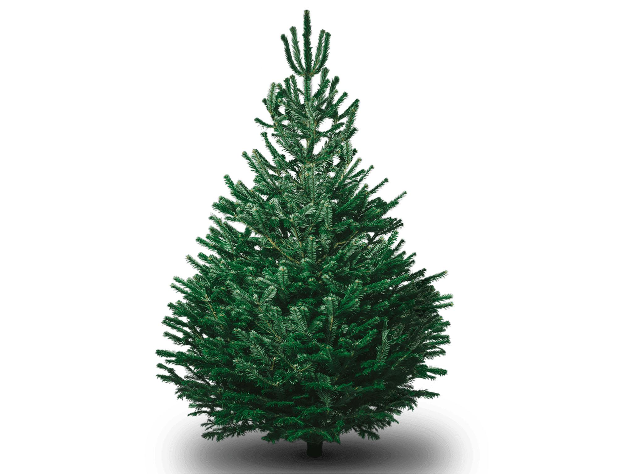 8 best real Christmas trees | The Independent
