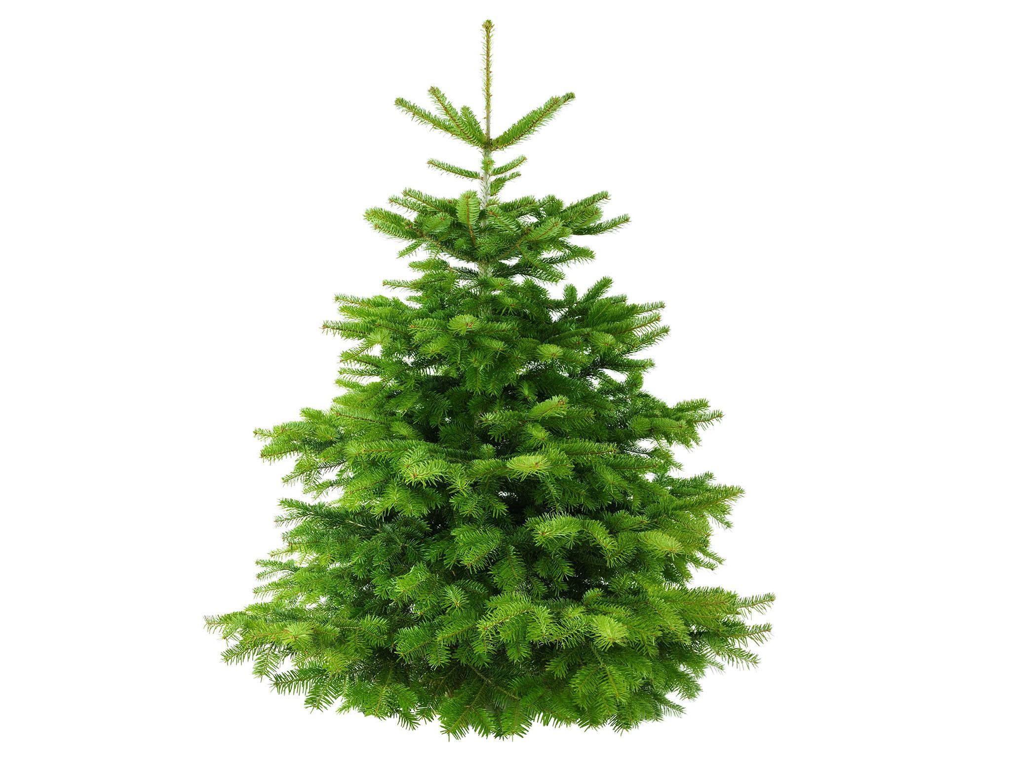 8 Best Real Christmas Trees The Independent