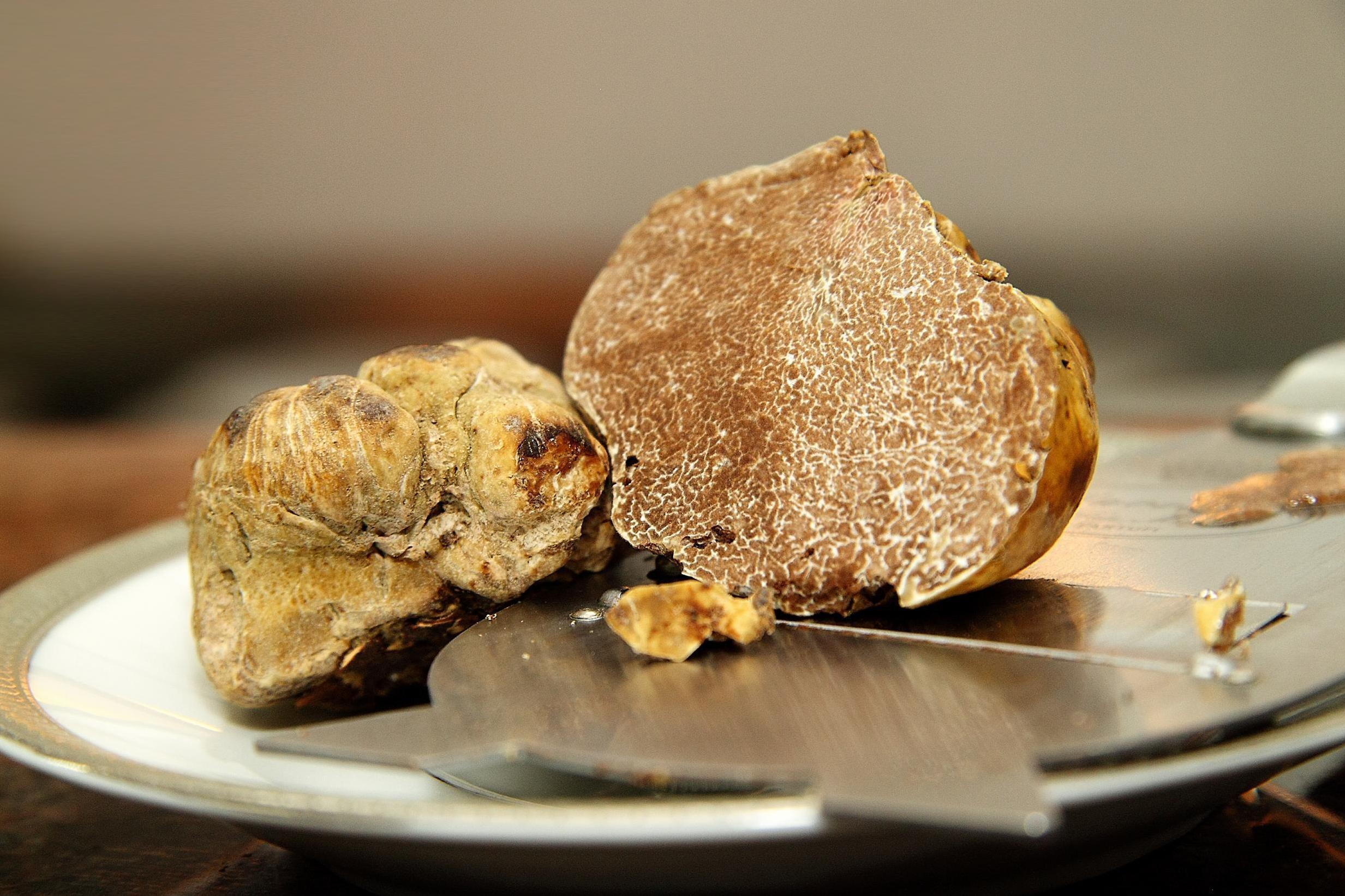 White truffle prices are half the cost of last year's 1