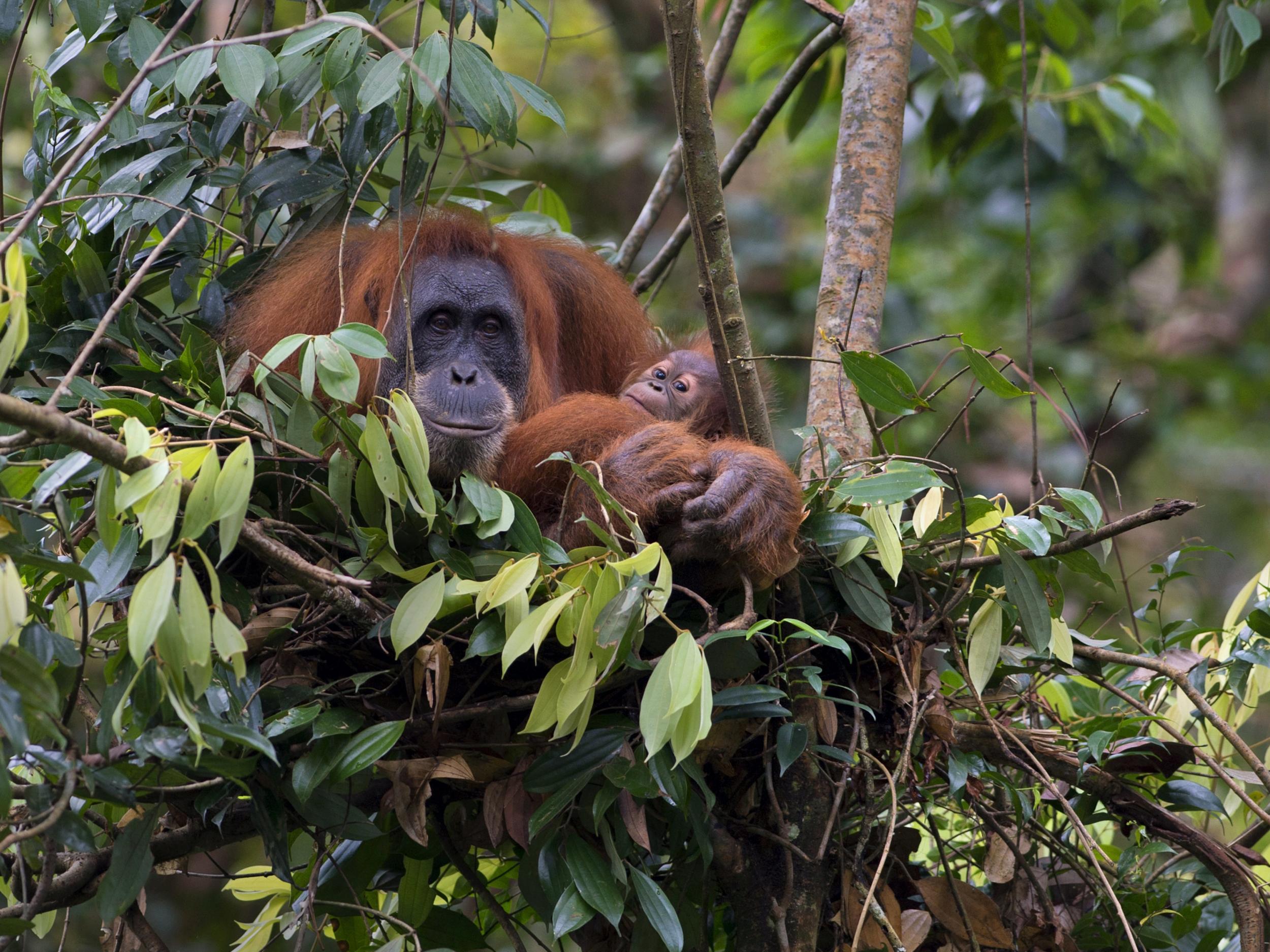 Norway to heavily restrict palm oils linked to devastating deforestation