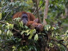 Norway to heavily restrict palm oils linked to deforestation