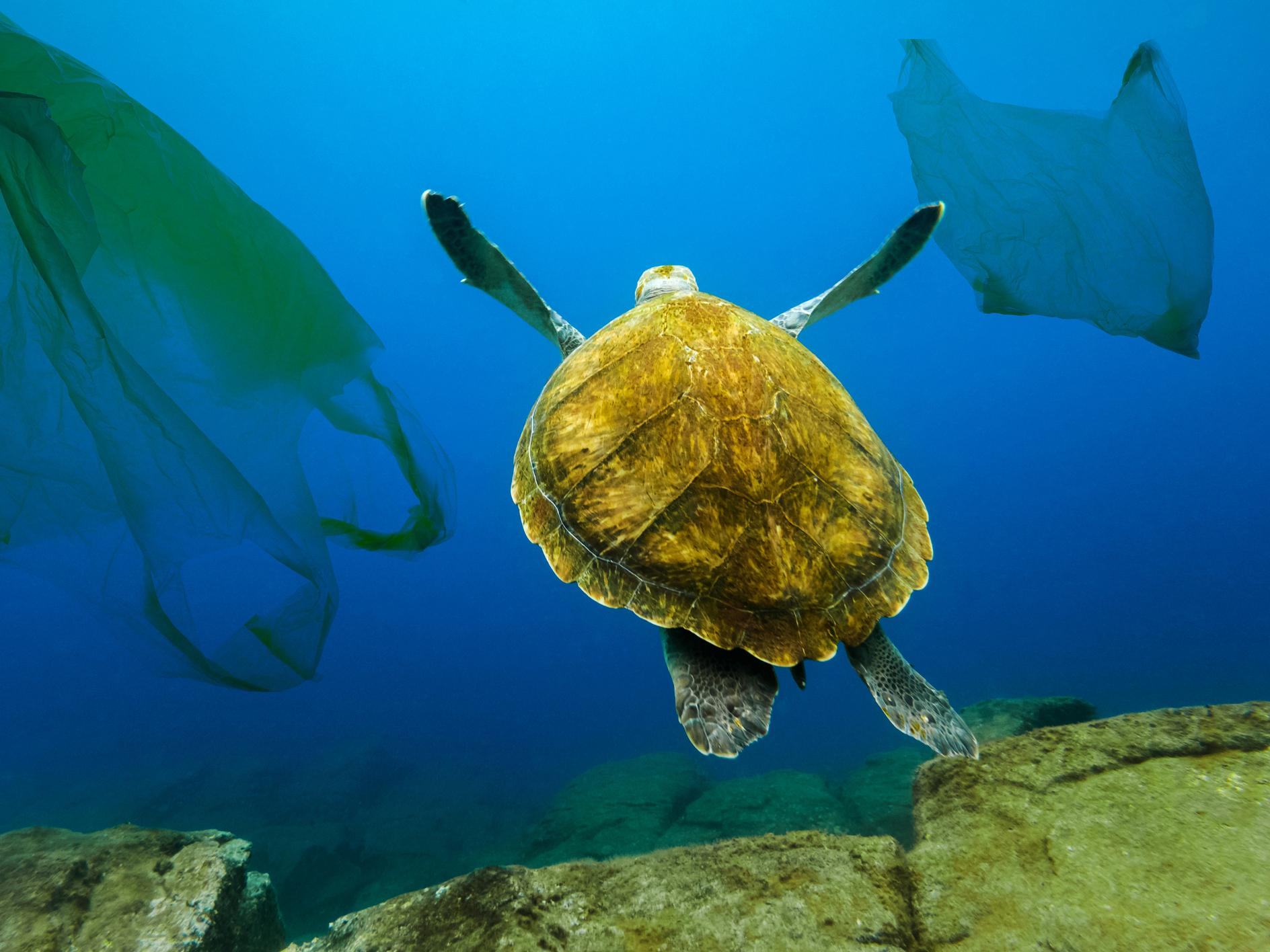 Turtles - latest news, breaking stories and comment - The