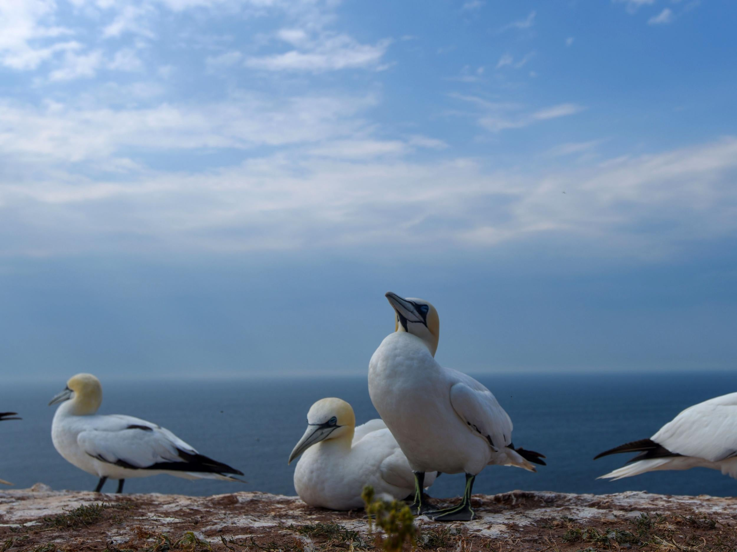 Seabird populations have dropped 70% as fishing industry competes for food