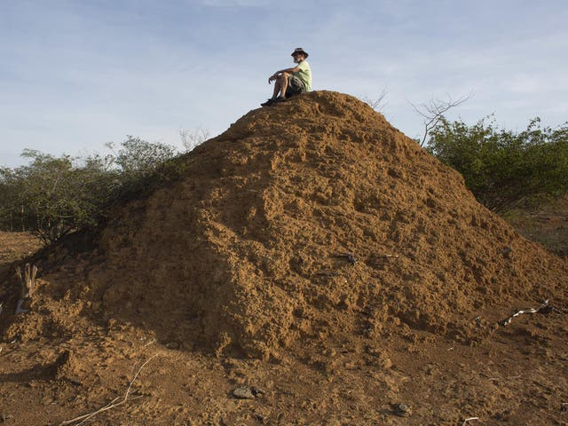 Botanist Roy Funch carried out radioactive dating to determine the age of the giant termite mounds near Palmeiras