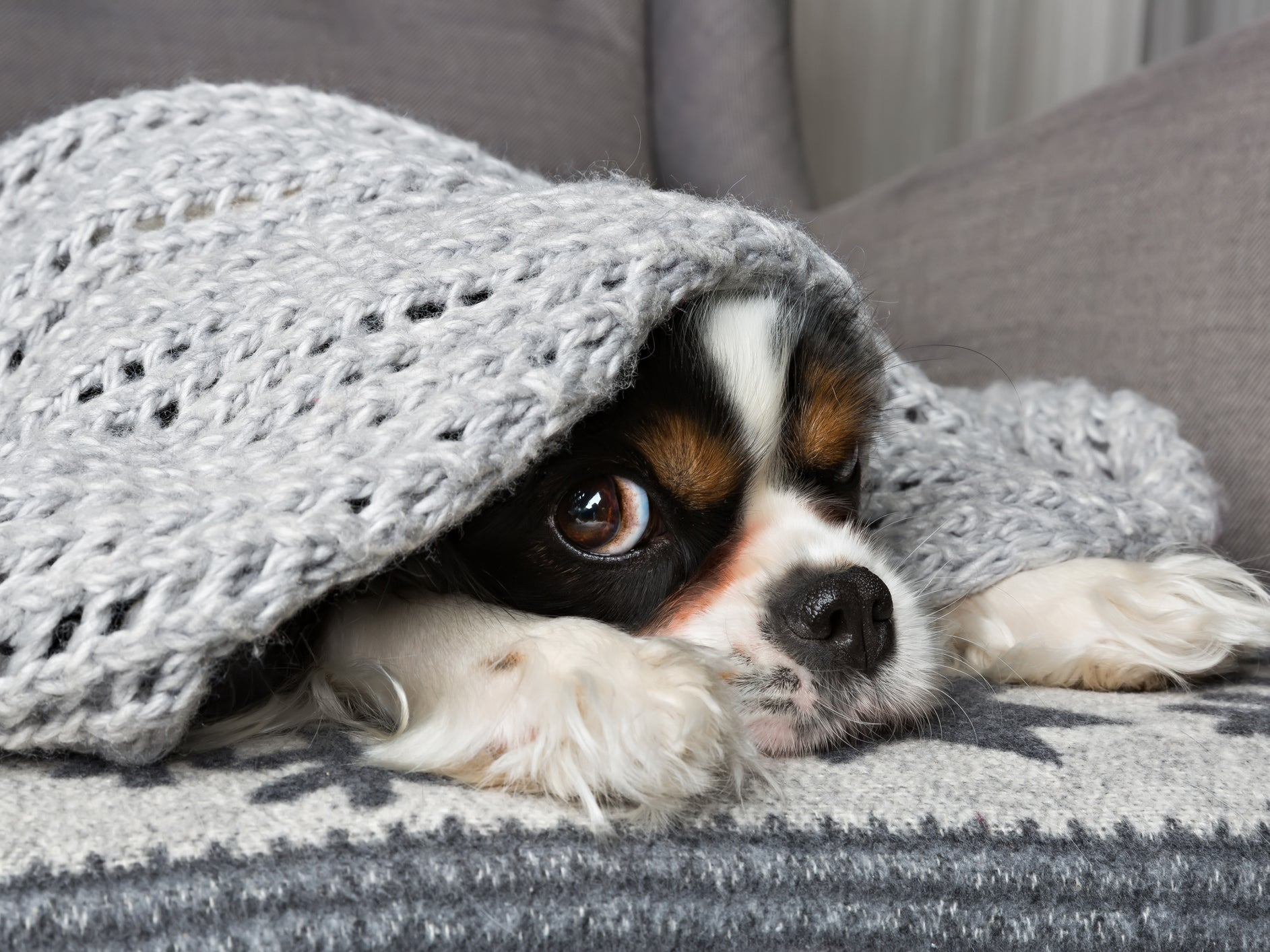 How to find the best pet insurance