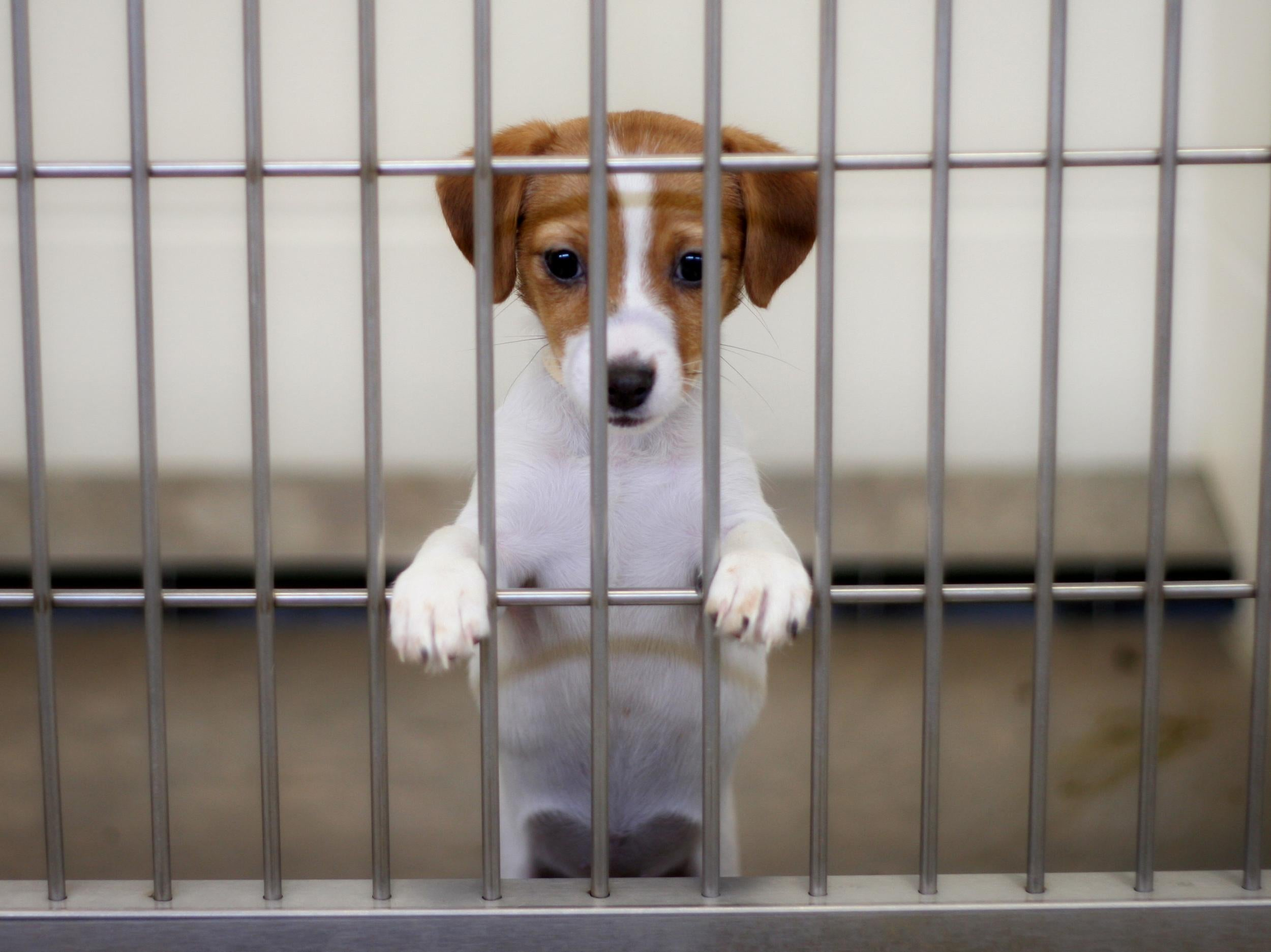 California becomes first US state to only sell rescued animals in pet shops