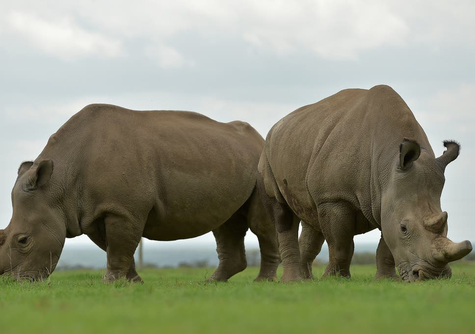 Girl, 2, airlifted to hospital after falling into rhino