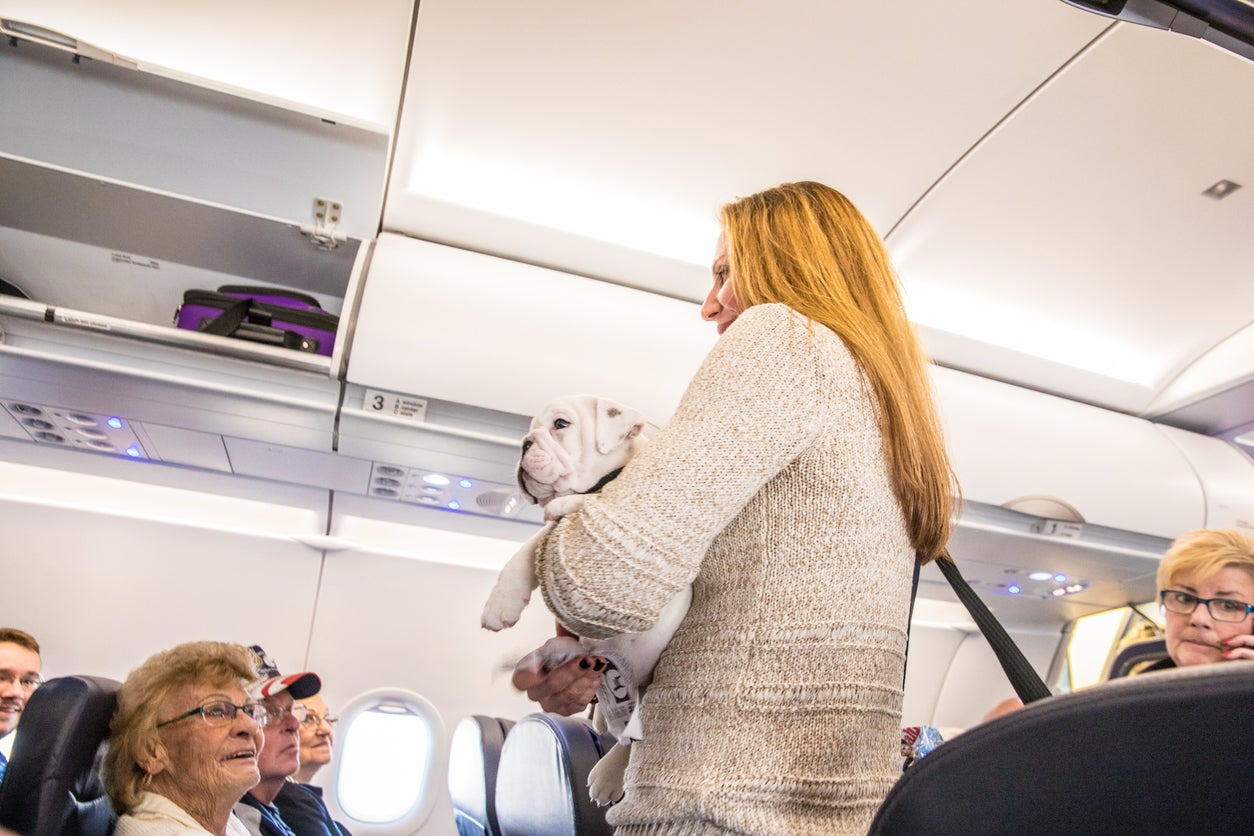 US proposes crackdown on emotional support animals on flights