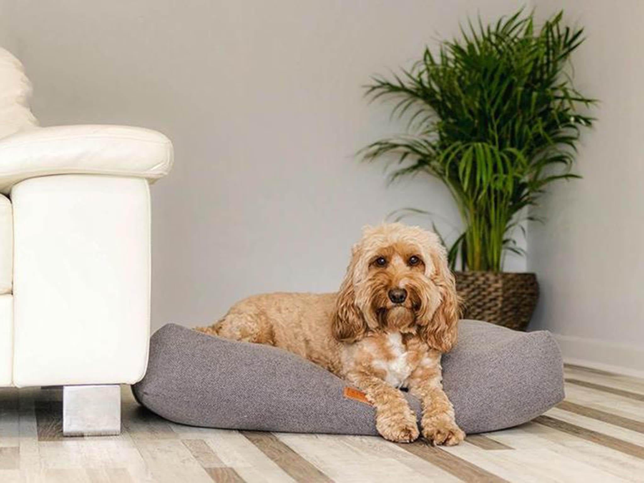 10 Best Dog Beds The Independent