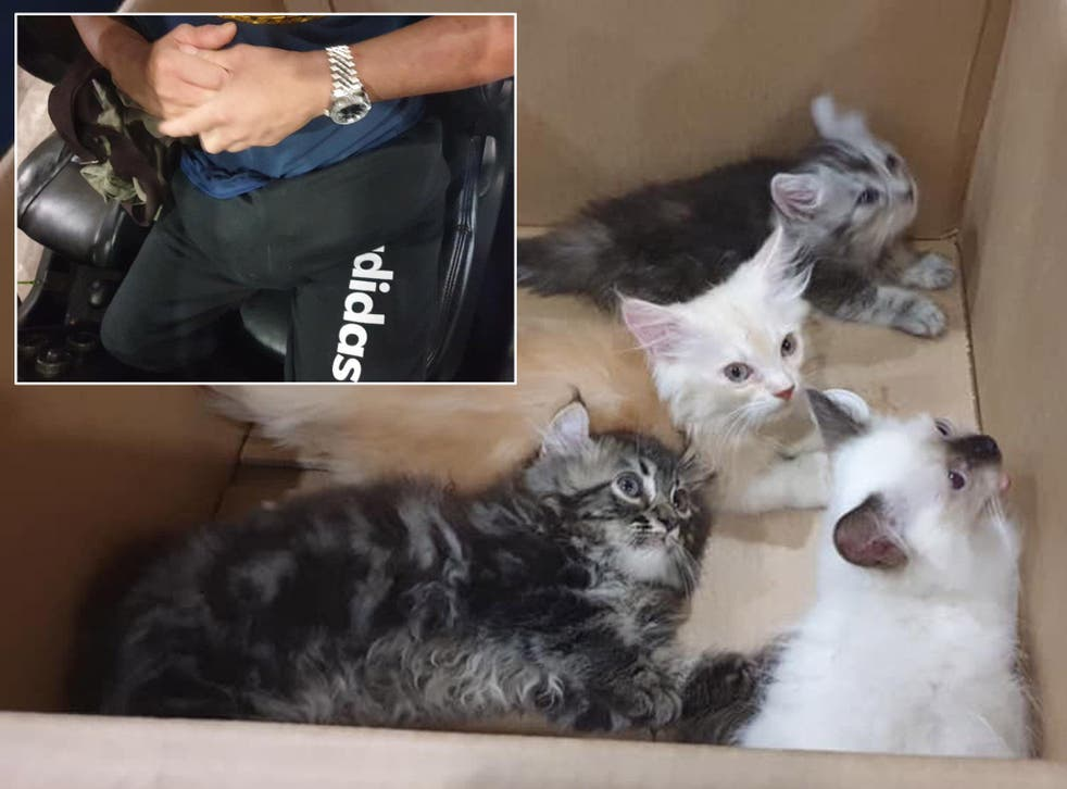 Four kittens were found hidden in a man's trousers