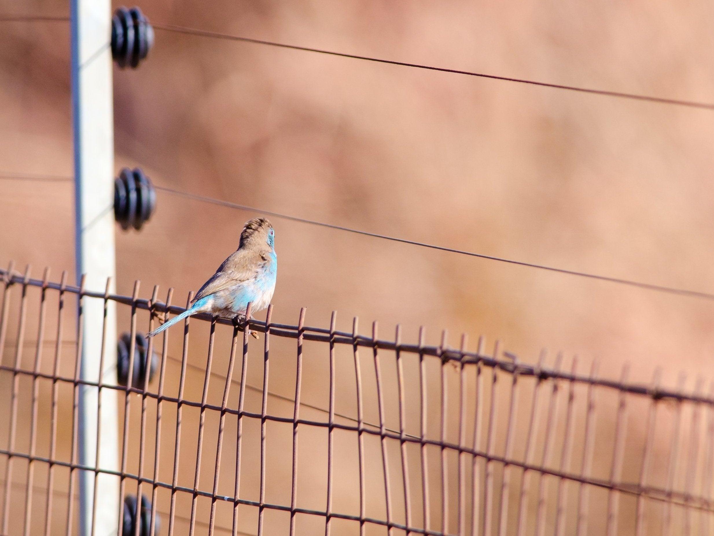 bird-power-line-south-africa.jpg