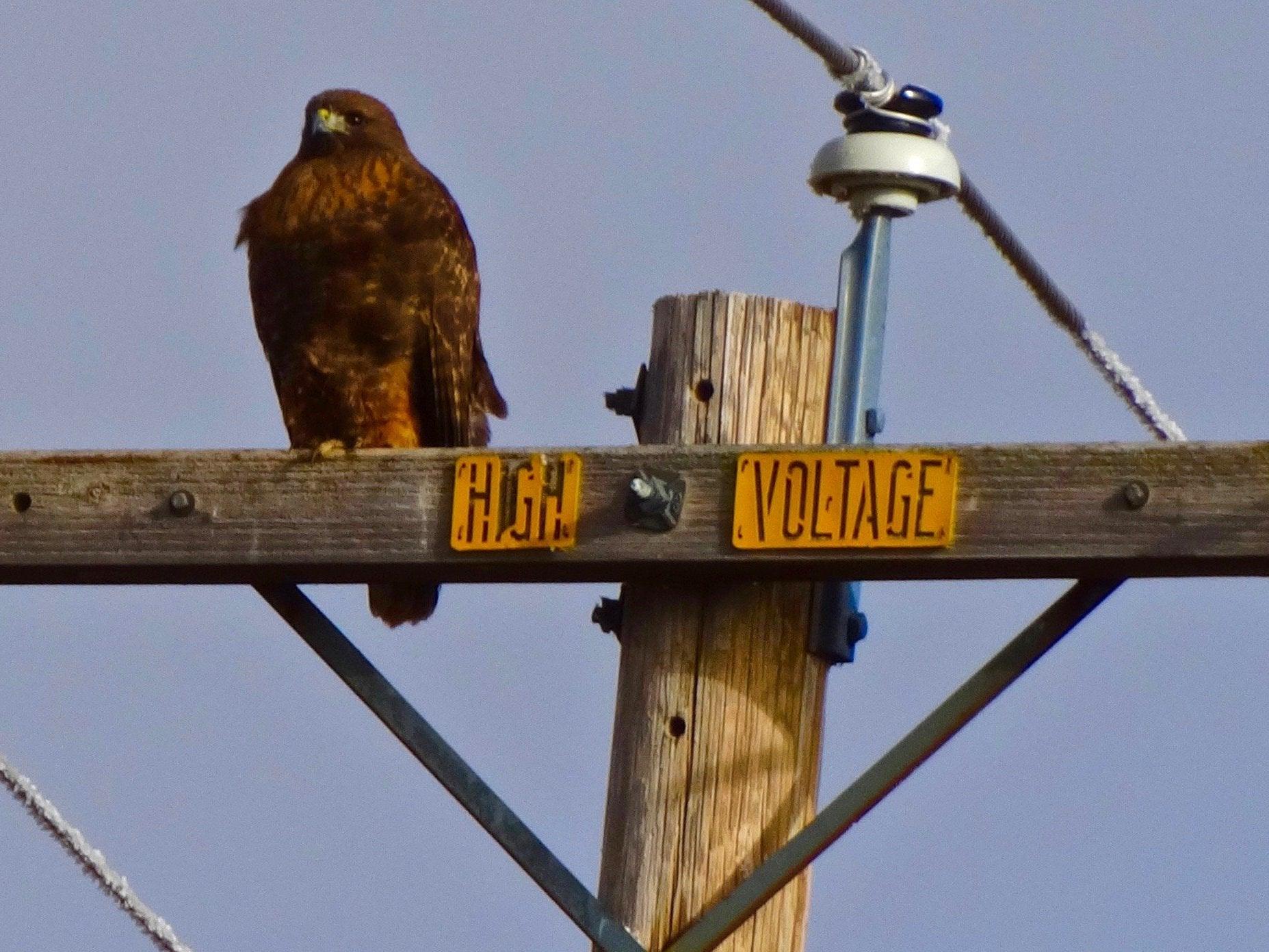 bird-us-power-line.jpg