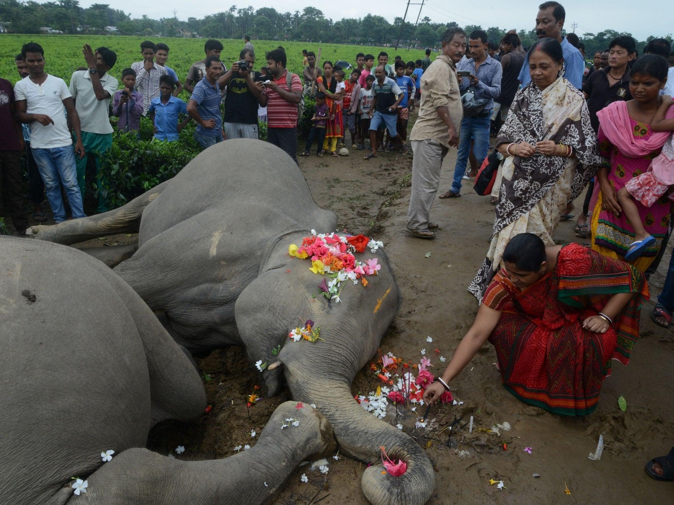 electrocuted-elephants-india.jpg