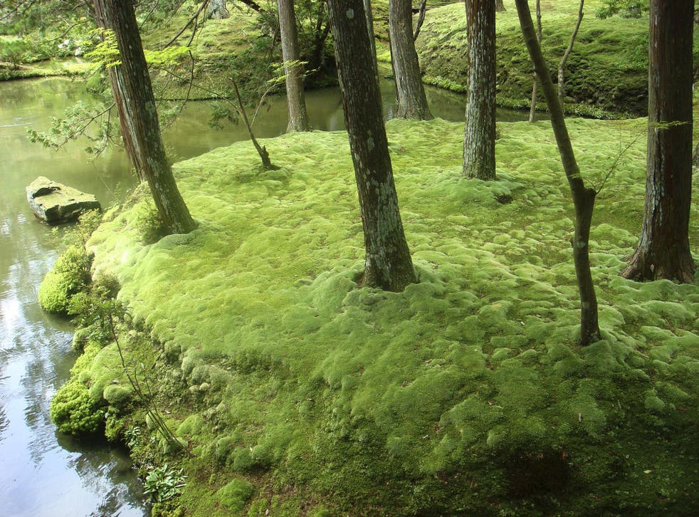 Primeval Moss Makes For A Peaceful, Growing A Moss Garden