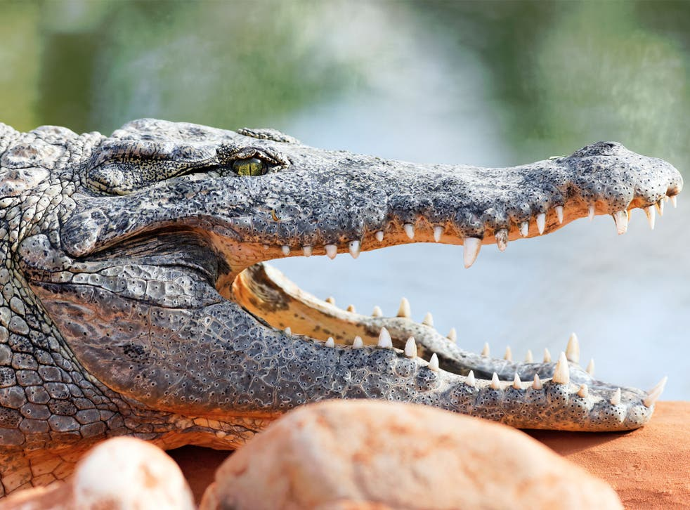 The scientist was reportedly killed by the crocodile after slipping and falling into its enclosure