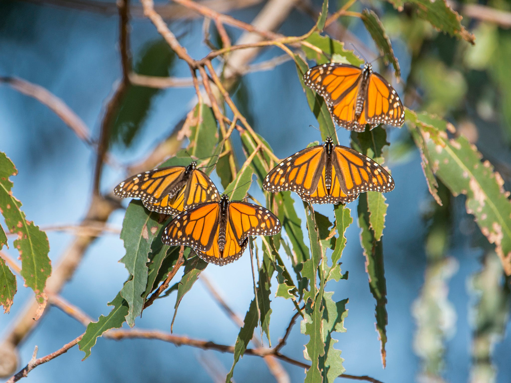 Mexico border wall: Demolition of US National Butterfly Centre begins to make way for barrier