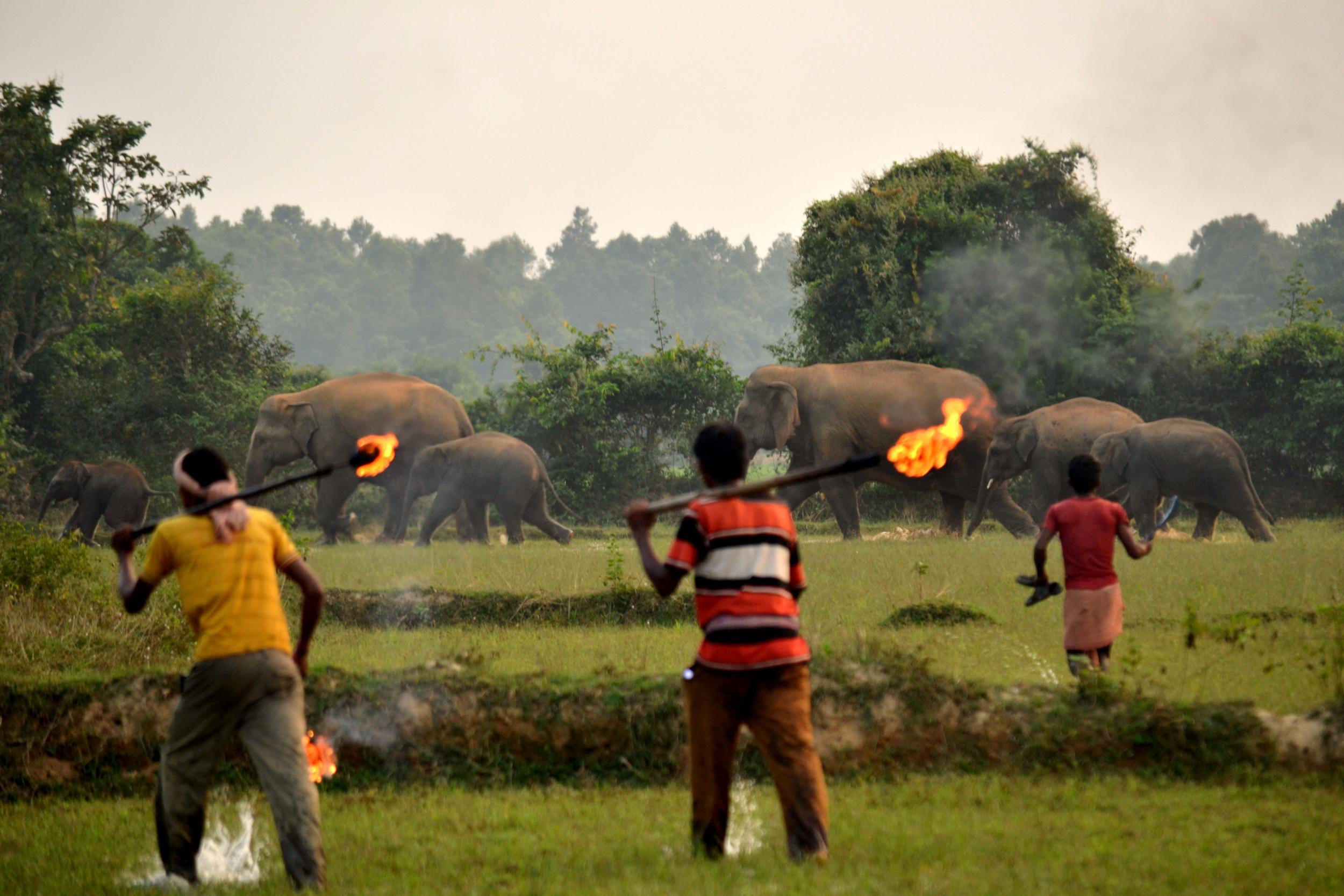 elephant-fire-sticks.jpg