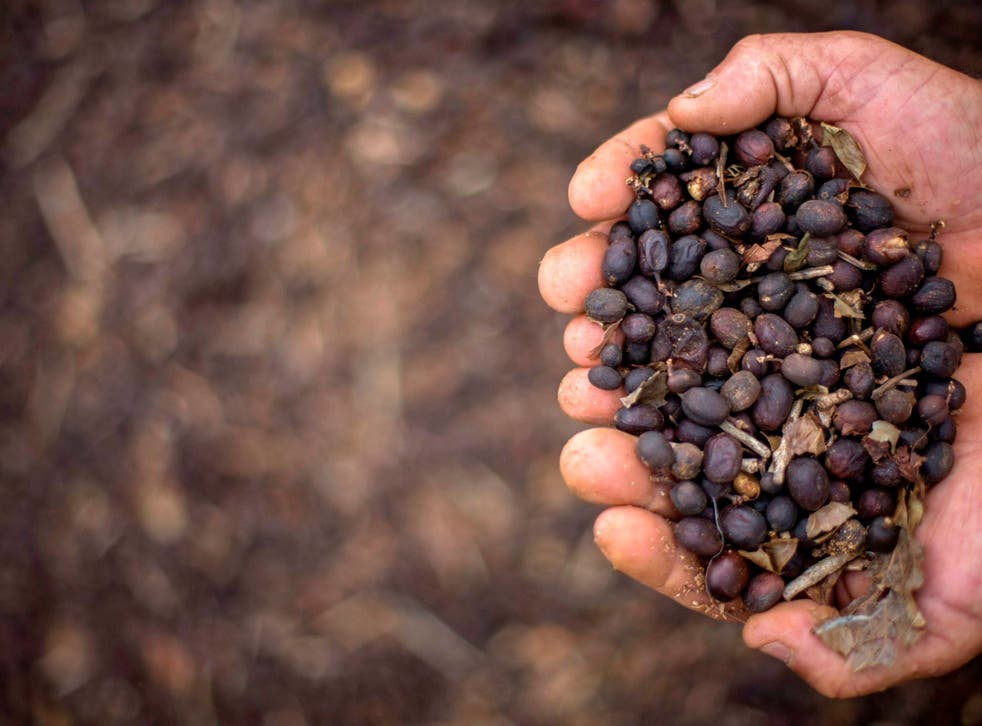 <p>The South East Asian country is the world's second largest exporter of coffee </p>