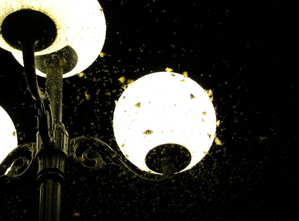 Street lights disrupt the natural cycles of nocturnal creatures