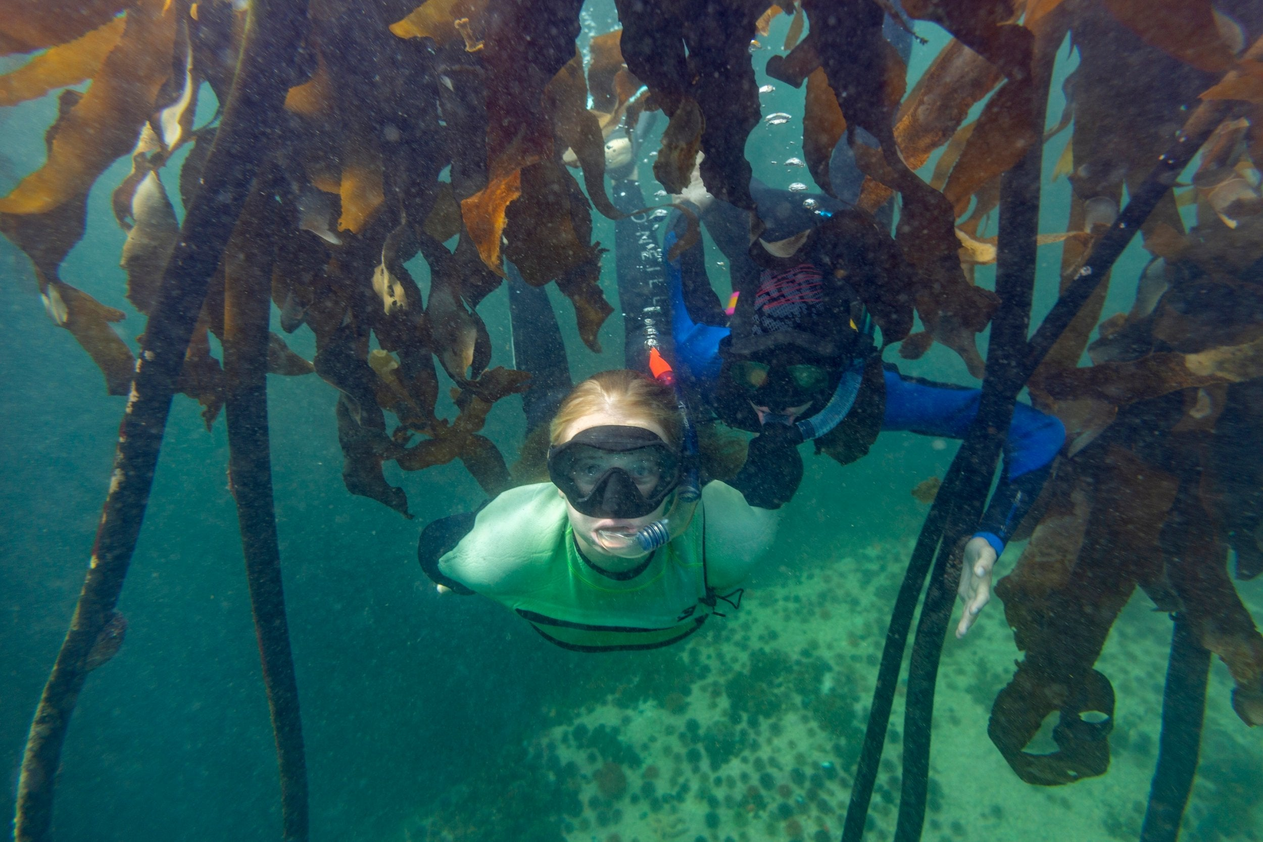 Arctic kelp forests: Expanding thanks to climate change