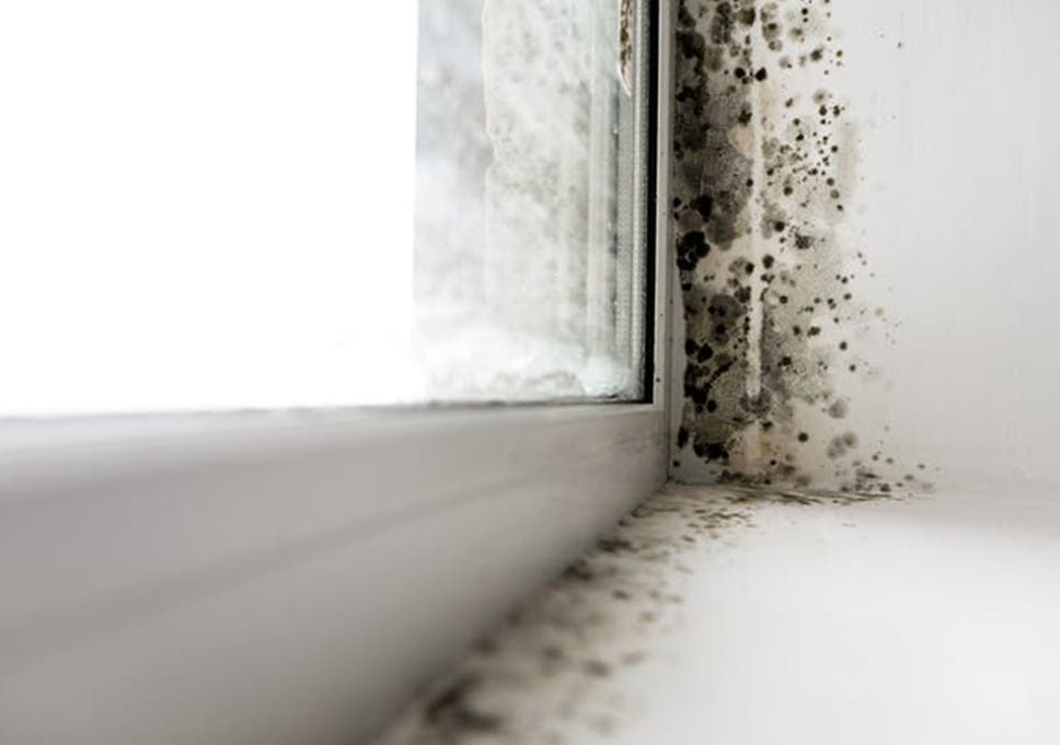 Tenants can sue landlords for cold or damp homes under new