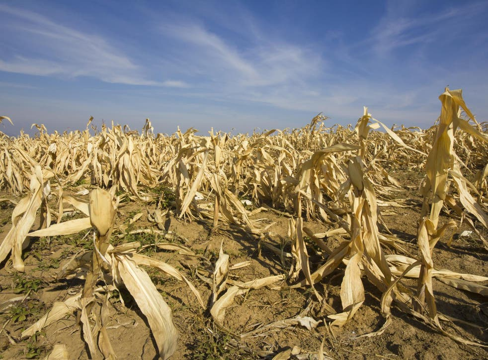 Around half of 'food shocks' involving crops were linked to extreme weather events