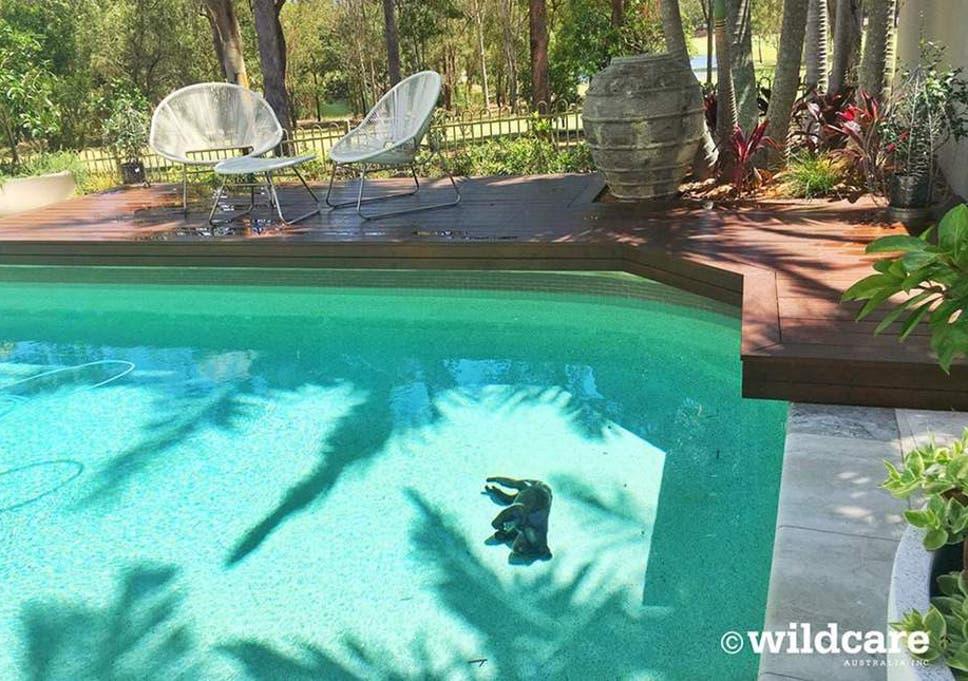Koala drowns while seeking shelter from Australia heatwave in ...