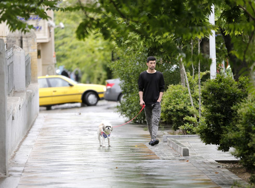 Dogs are everywhere in Tehran, despite authorities taking a dim view on ownership