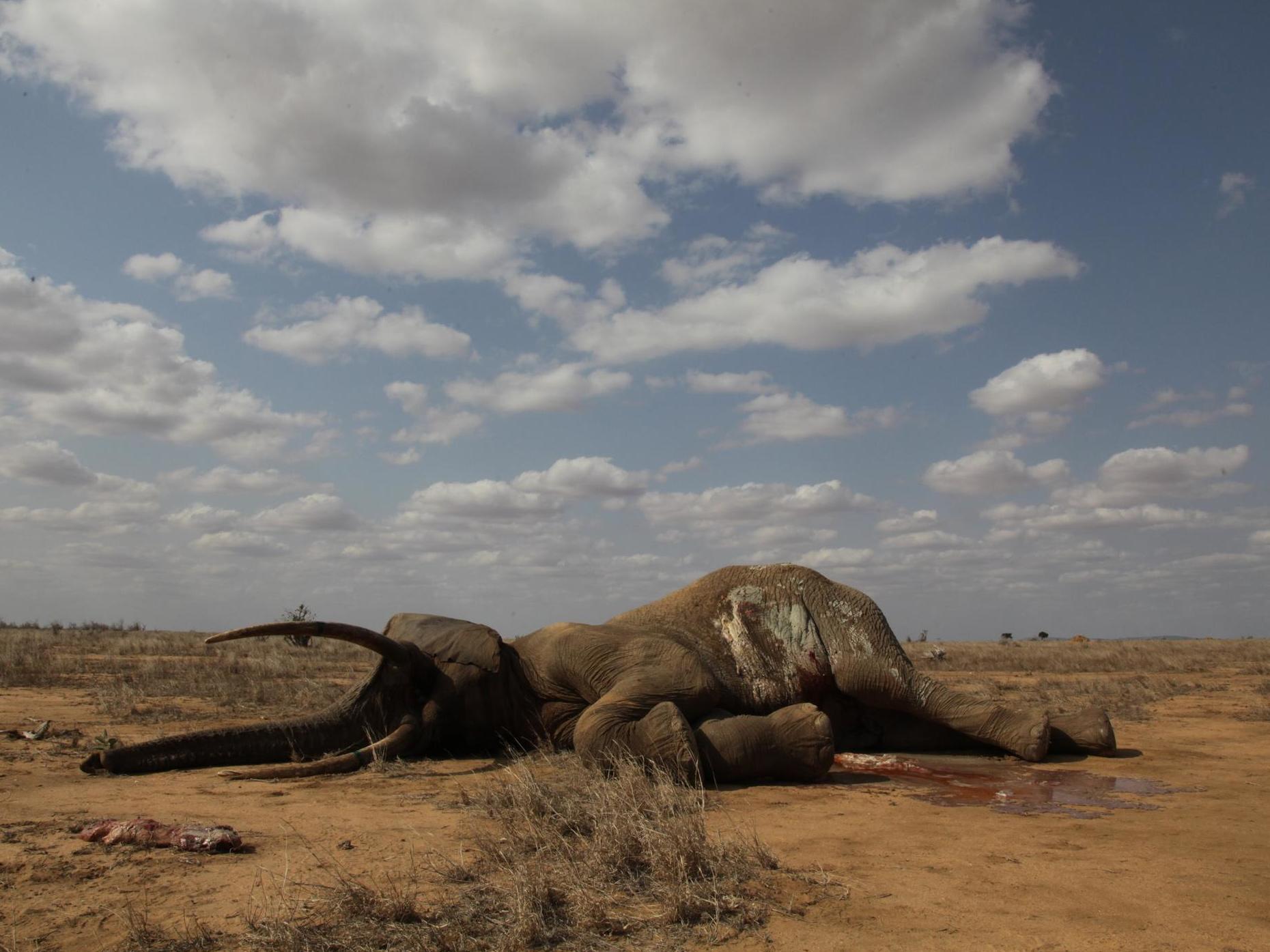 Meat-eating humans pushing hundreds of planet's biggest animals toward extinction