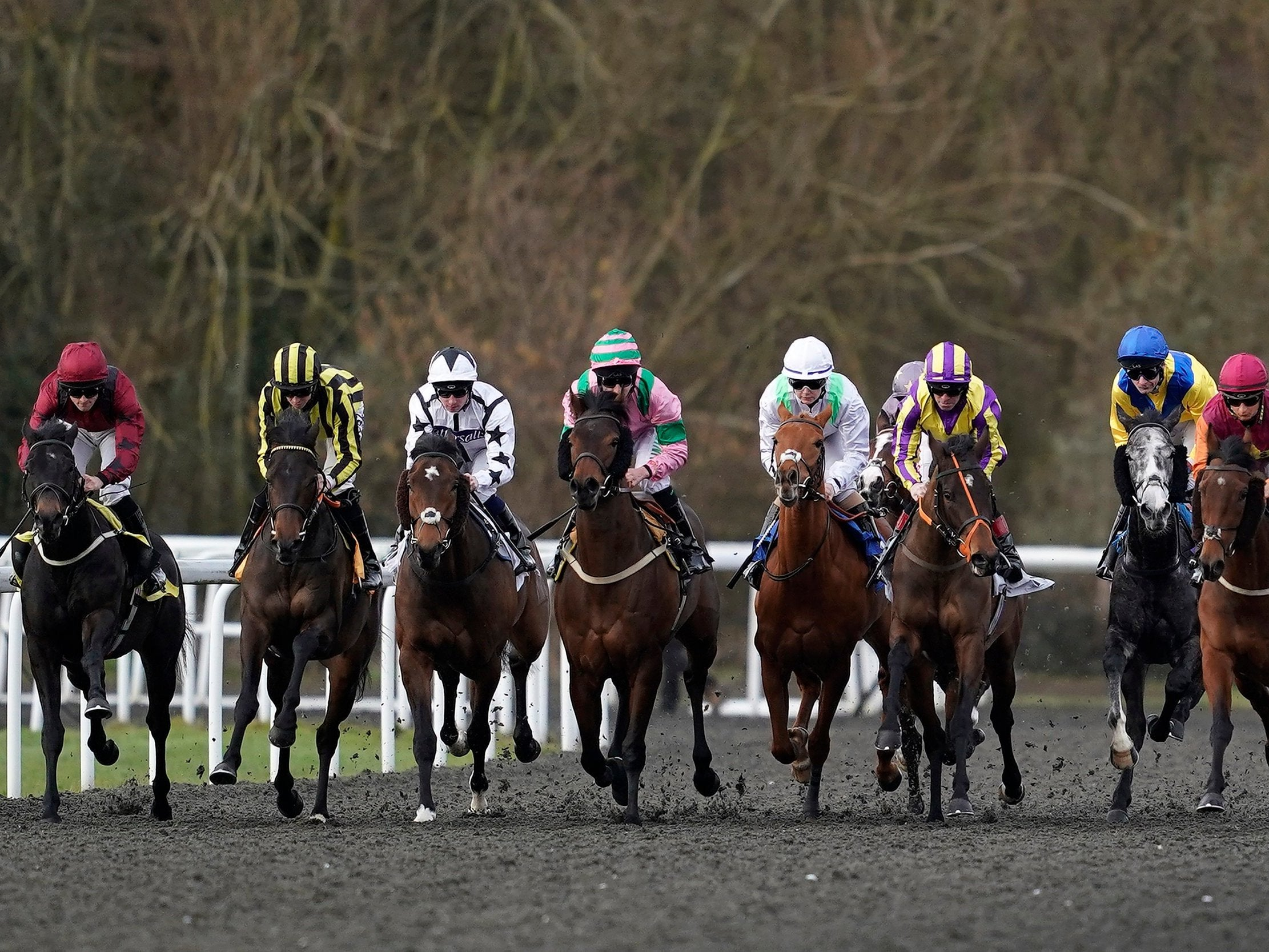 Equine Flu: Horse Racing Today Cancelled After Outbreak Of Equine Flu