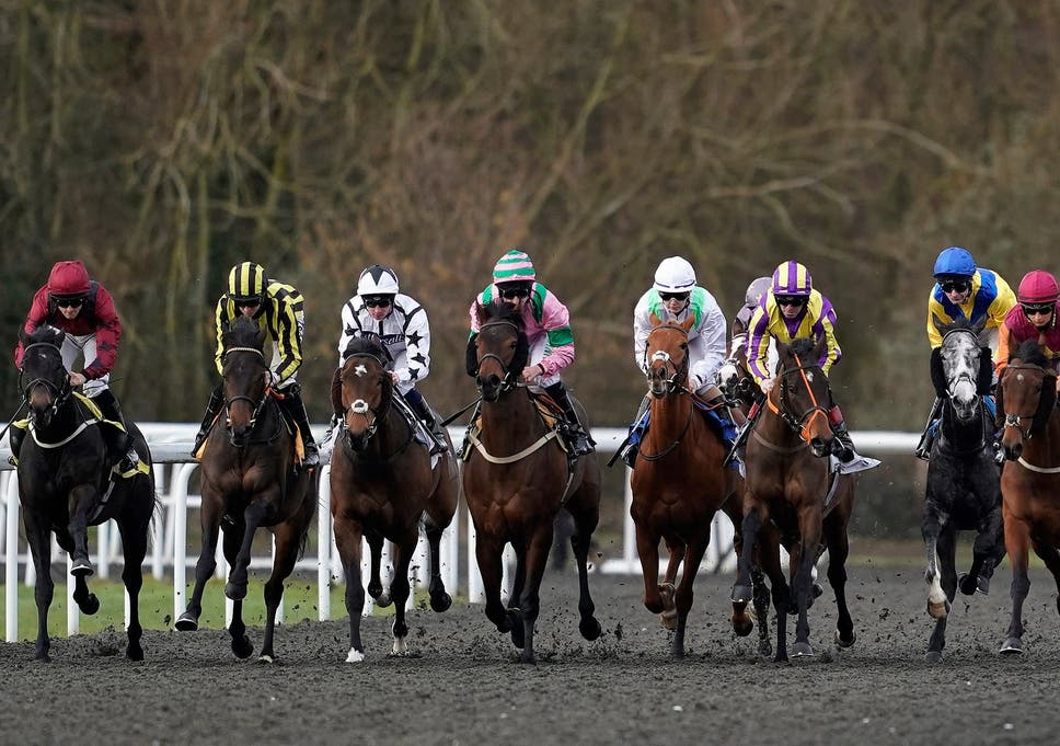 Horse racing today cancelled after outbreak of equine flu