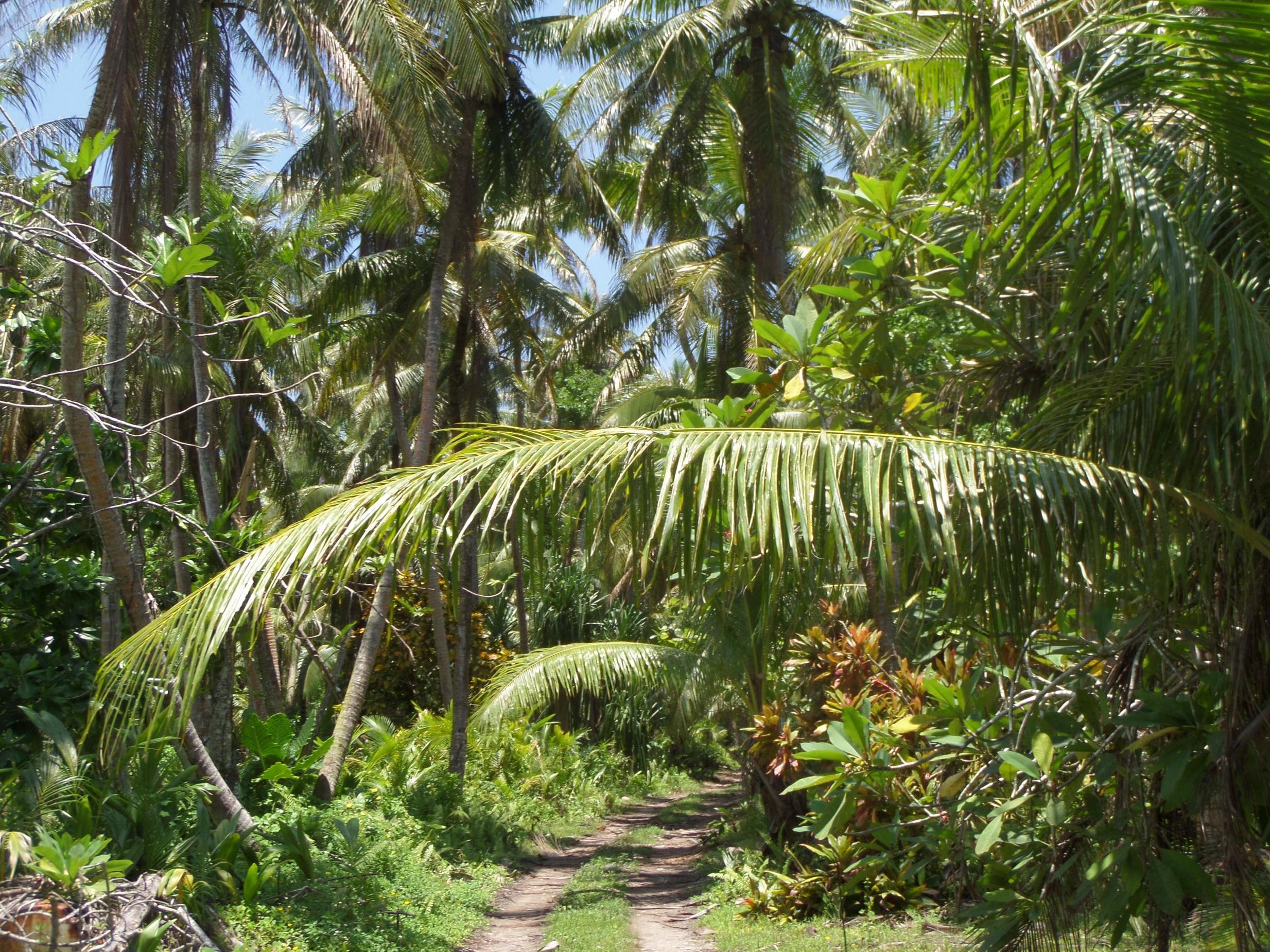 Tropical island forest on Guam to be dug up for military firing range