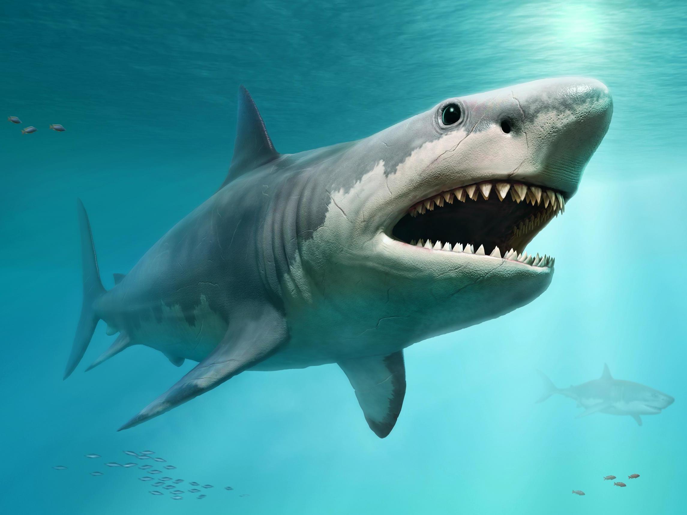 Megalodon: Mystery behind extinction of prehistoric 60ft