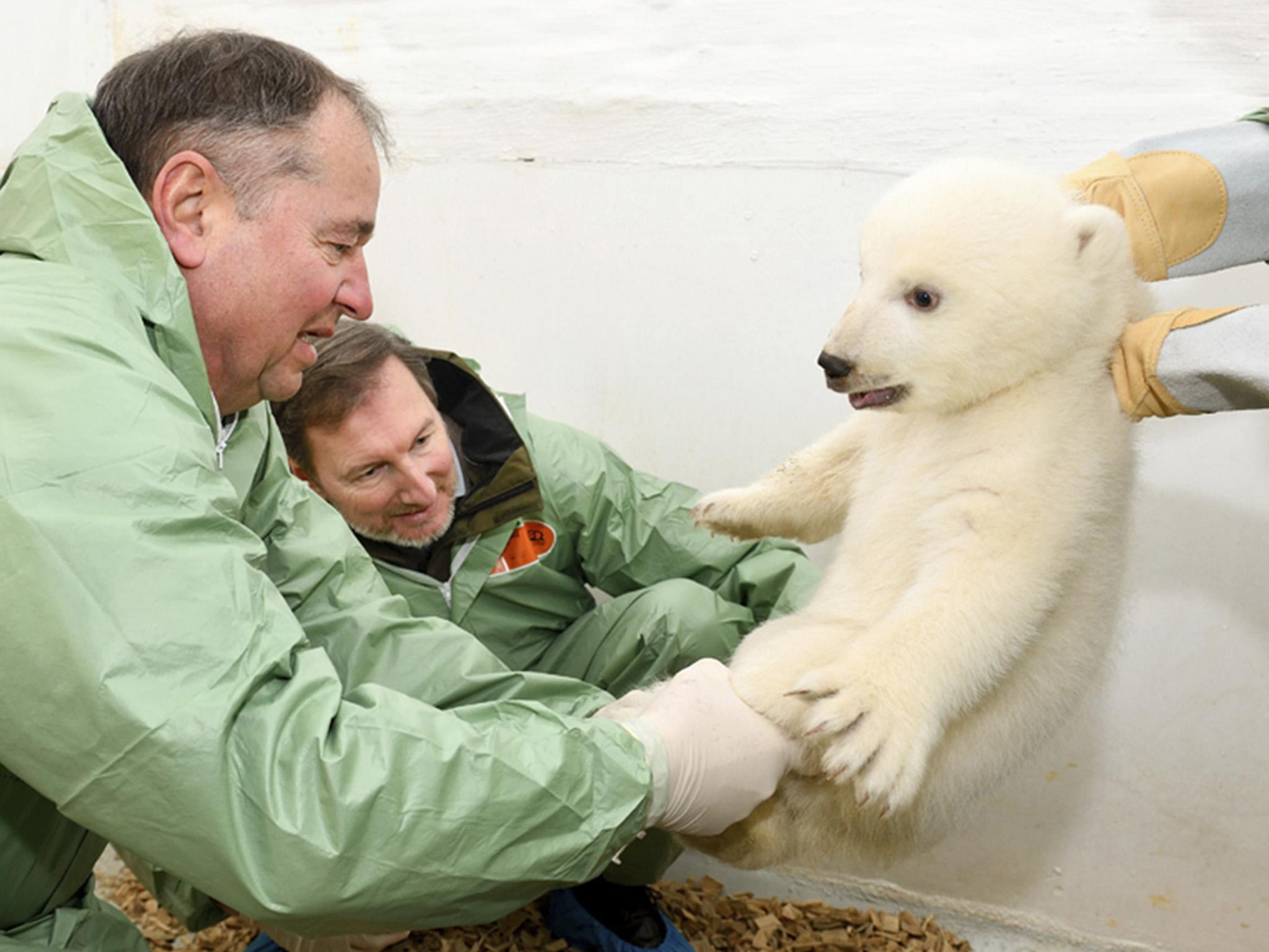 First pictures of polar bear cub born in Berlin Zoo