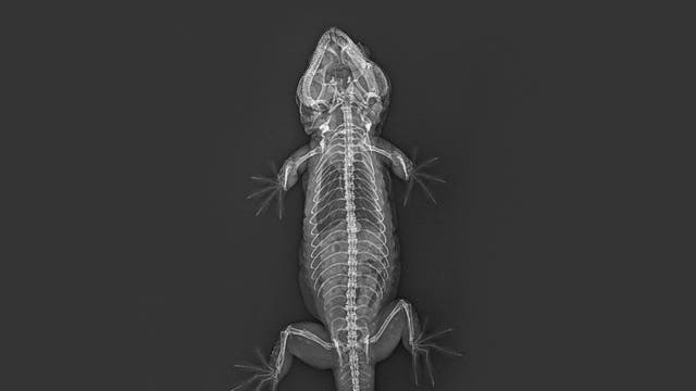 18,000 animals have been x-rayed as part of routine health checks at London Zoo in Regent's Park