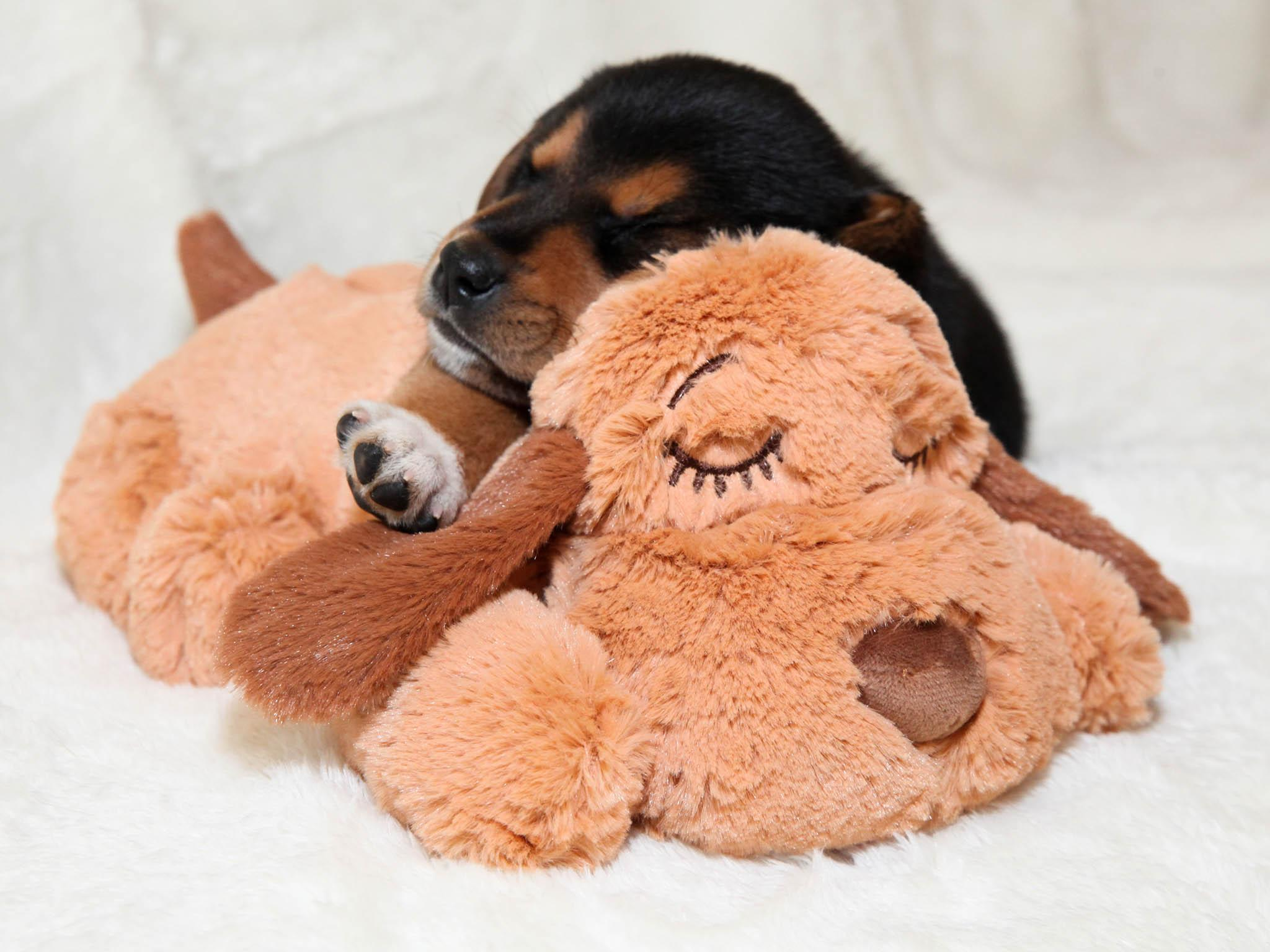 10 best dog toys | The Independent