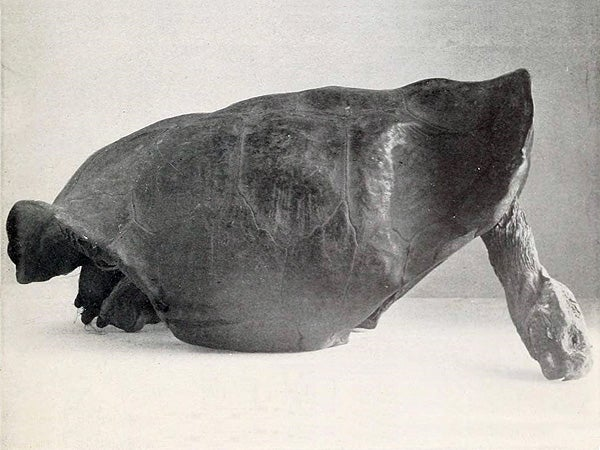 Giant tortoise believed extinct for 100 years discovered in Galapagos