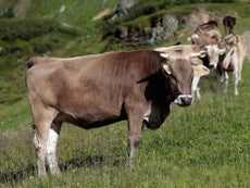 Farmer ordered to pay £425,000 after tourist killed by herd of cows