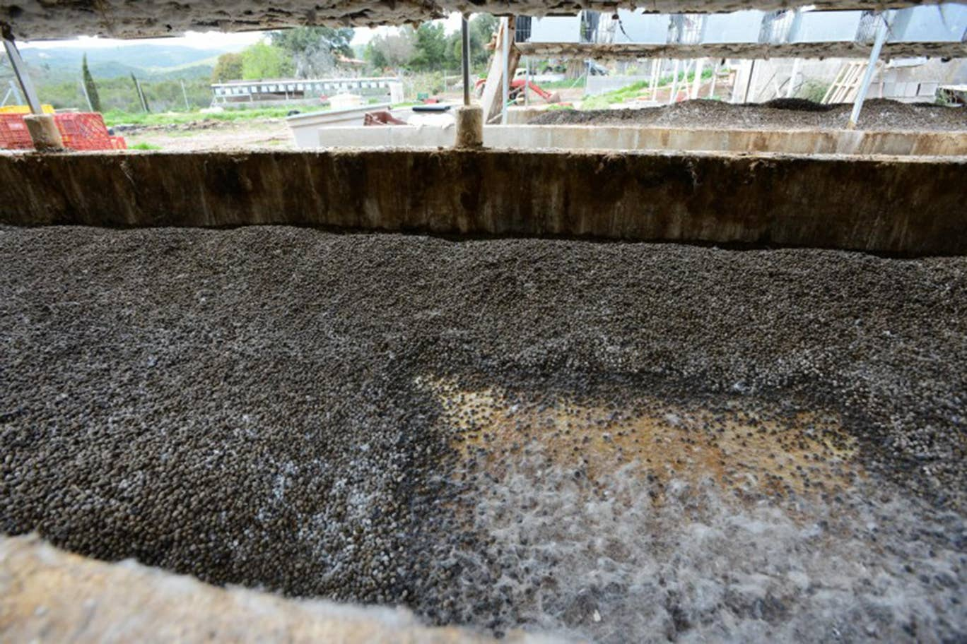 Excrement below rabbit cages on industrial farm