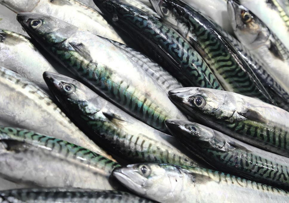 Mackerel stocks have been declining for at least eight years