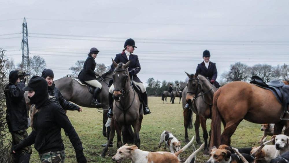 Jacob Rees-Mogg 'hosted fox hunt where badger sett was