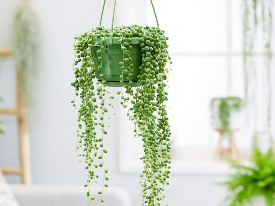8 best house plants, hanging planters and terrariums | The ... Hypoallergenic House Plants on non toxic house plants, allergy house plants, long lasting house plants, durable house plants,